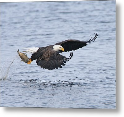 Up Up And Away Metal Print by Gerry Sibell