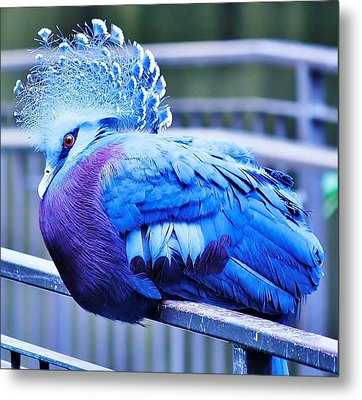 Metal Print featuring the photograph Victoria Crowned Pigeon by Al Fritz