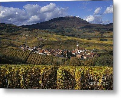 Vineyard In Alsace, France Metal Print