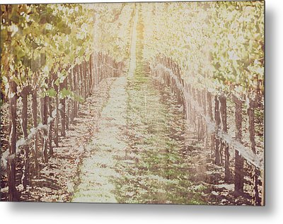 Vineyard In Autumn With Vintage Film Style Filter Metal Print