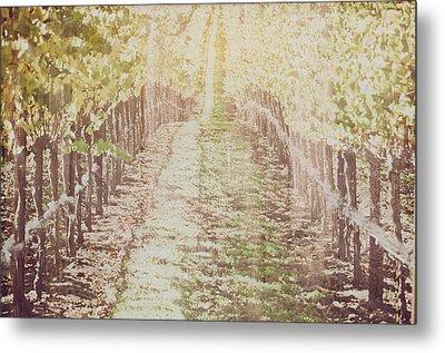 Vineyard In Autumn With Vintage Film Style Filter Metal Print