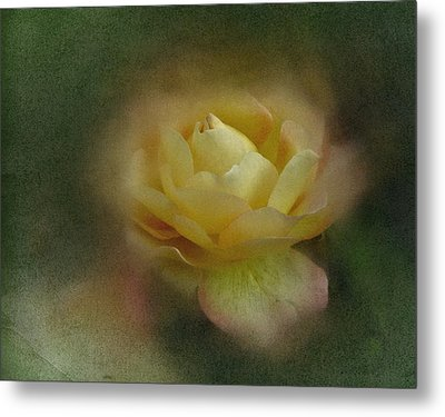 Metal Print featuring the photograph Vintage October Rose  by Richard Cummings