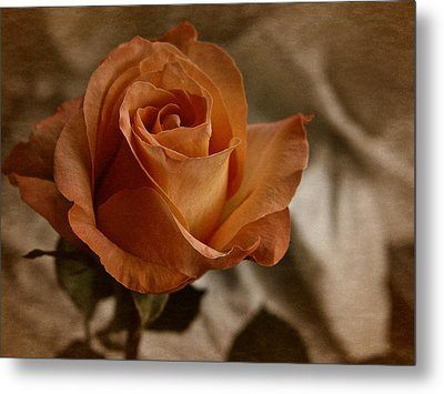 Metal Print featuring the photograph Vintage Orange Rose by Richard Cummings