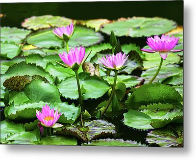 Metal Print featuring the photograph Water Lilies by Anthony Jones