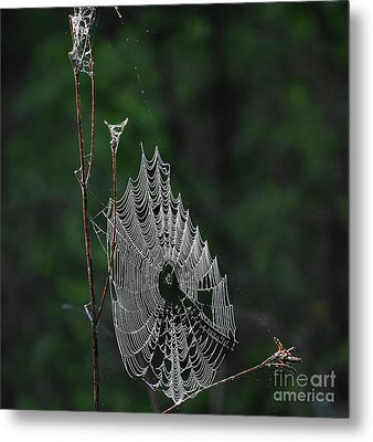 Metal Print featuring the photograph Webs We Weave by Skip Willits