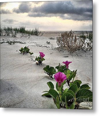 Weekend Glories 6.18.16 Metal Print