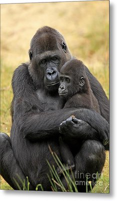 Western Gorilla And Young Metal Print