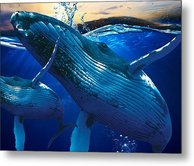 Whale Watching Art Metal Print by Marvin Blaine