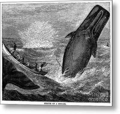 Whaling, 19th Century Metal Print by Granger