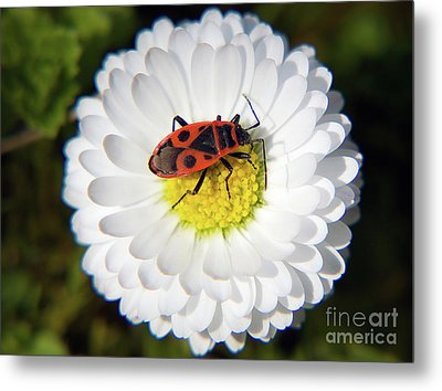 Metal Print featuring the photograph White Flower by Elvira Ladocki