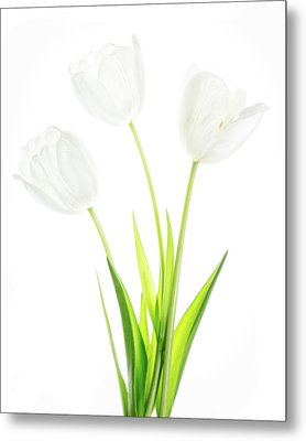 Metal Print featuring the photograph White On White by Rebecca Cozart