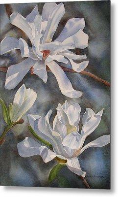 White Star Magnolia Blossoms Metal Print by Sharon Freeman