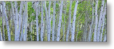 White Wilderness Panorama Metal Print by James BO Insogna