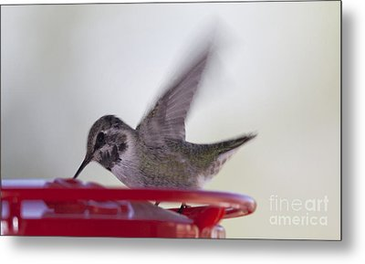 Wings In Motion 2 Metal Print by Anne Rodkin