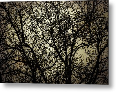 Winter Branches Metal Print by Garry Gay