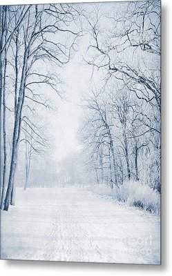 Winter Path Metal Print by Svetlana Sewell
