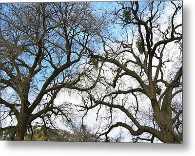 Metal Print featuring the photograph Winter Trees At Fort Tejon Lebec California  by Floyd Snyder