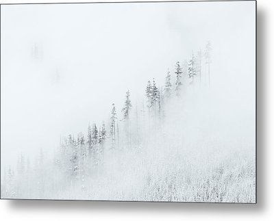 Winter Veil Metal Print by Mike  Dawson