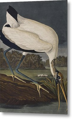 Wood Ibis Metal Print by John James Audubon