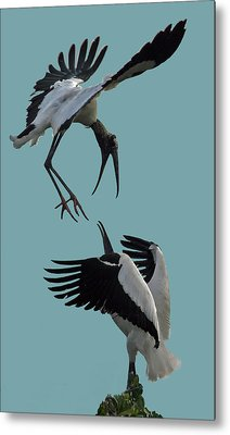 Wood Stork Pair Metal Print
