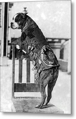 Wwi, Sergeant Stubby, American War Dog Metal Print by Science Source