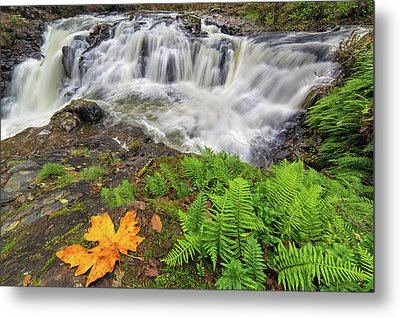 Yacolt Falls In Autumn Metal Print by David Gn