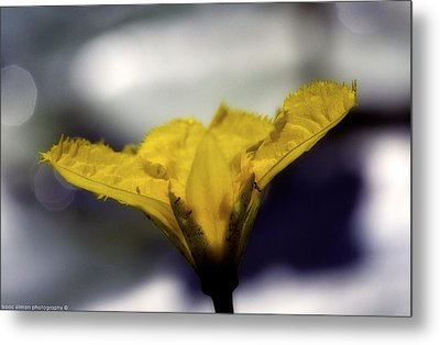 Yellow Flower Metal Print by Isaac Silman