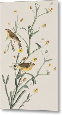 Yellow Red-poll Warbler Metal Print by John James Audubon