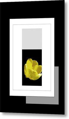 Yellow Tulip 2 Of 3 Metal Print