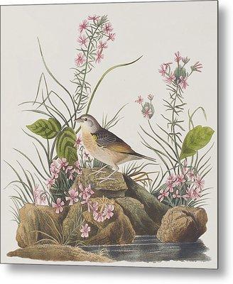 Yellow-winged Sparrow Metal Print by John James Audubon