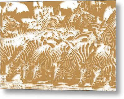 Zebra 3 Metal Print by Joe Hamilton