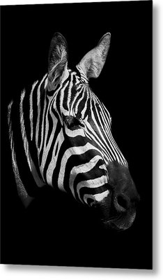 Zebra Metal Print by Paul Neville