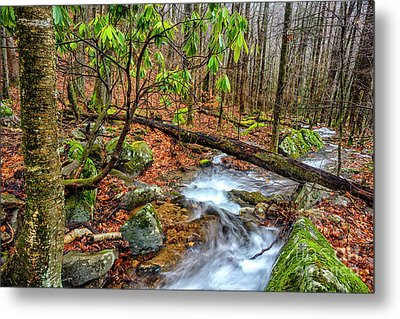 Metal Print featuring the photograph Little Laurel Branch by Thomas R Fletcher