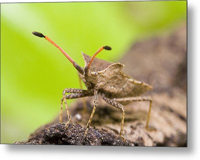 Bug Metal Print by Andre Goncalves