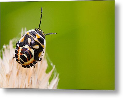 Bug Metal Print by Andre Goncalves