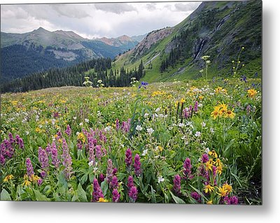 Wildflower Meadow Metal Print by Bob Gibbons