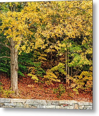 Autumn Series Metal Print by HD Connelly