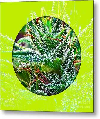 Cannabis 420 Collection Metal Print by Marvin Blaine