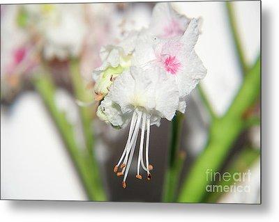 Spring Flowers Metal Print by Elvira Ladocki