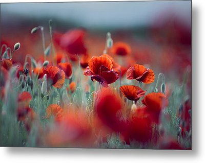 Summer Poppy Meadow Metal Print
