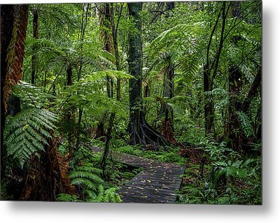 Metal Print featuring the photograph Forest Boardwalk by Les Cunliffe
