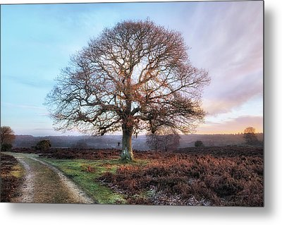 New Forest - England Metal Print by Joana Kruse