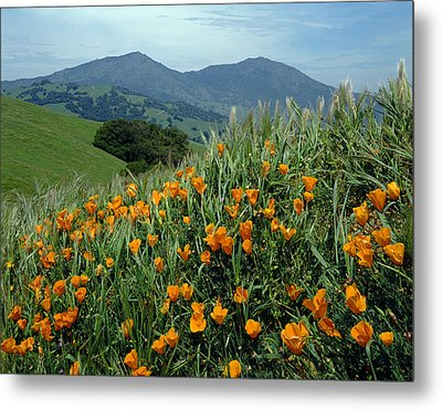 1a6493 Mt. Diablo And Poppies Metal Print