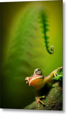 Amazon Tree Frog Metal Print