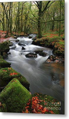 Autumn At Golitha Falls Metal Print by Carl Whitfield