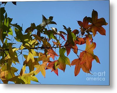 Metal Print featuring the photograph Autumn Leaves by Jean Bernard Roussilhe