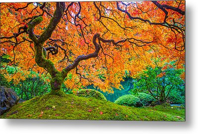 Metal Print featuring the photograph Autumn's Jewel by Patricia Davidson