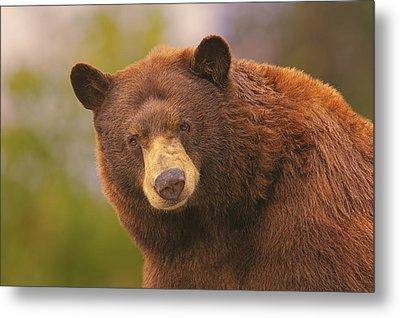 Black Bear Metal Print
