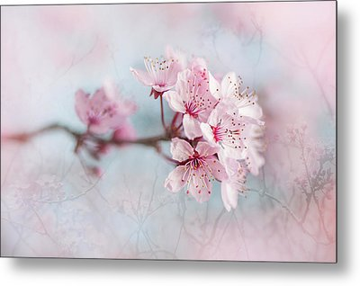 Black Cherry Plum Blossom Metal Print by Jacky Parker