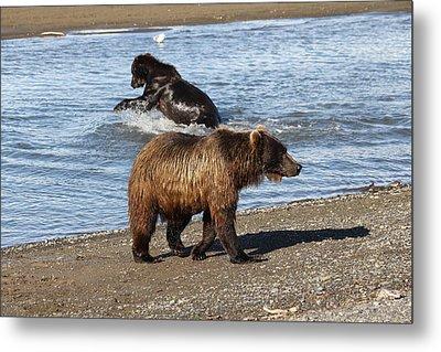 2 Brown Bears Fishing Metal Print by David Wilkinson